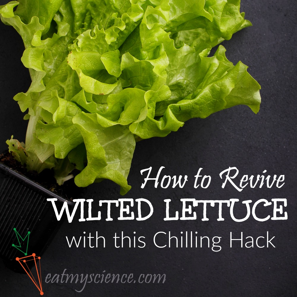 How to Revive Wilted Lettuce with this Chilling Hack! Perk up that salad and quit wasting food